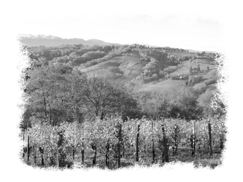 cru-lamouroux-vignes2